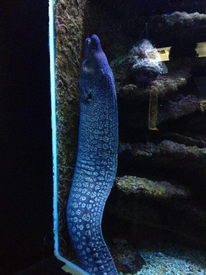 L'aquarium du Cap d'Agde (34) 15066510