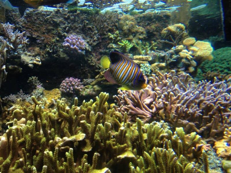 L'aquarium du Cap d'Agde (34) 15110410