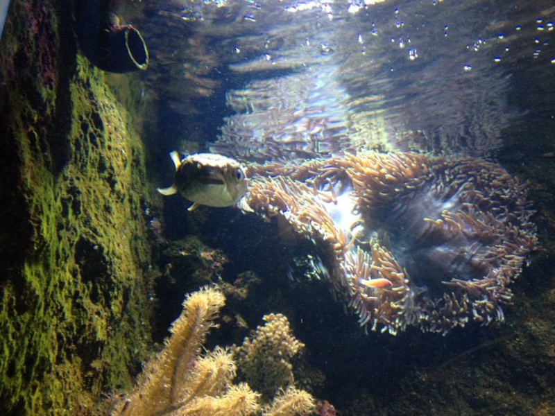 L'aquarium du Cap d'Agde (34) 16047410