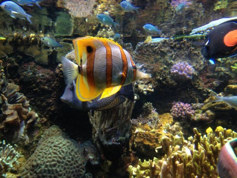 L'aquarium du Cap d'Agde (34) 16217910