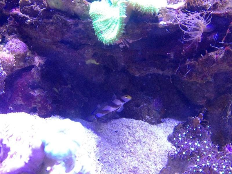 L'aquarium du Cap d'Agde (34) 16883010
