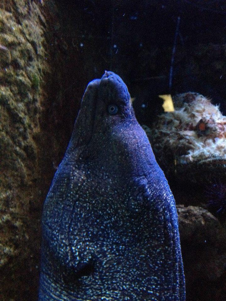 L'aquarium du Cap d'Agde (34) 17806510