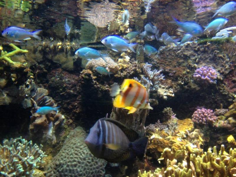 L'aquarium du Cap d'Agde (34) 17820410