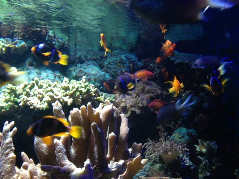 L'aquarium du Cap d'Agde (34) 18911410