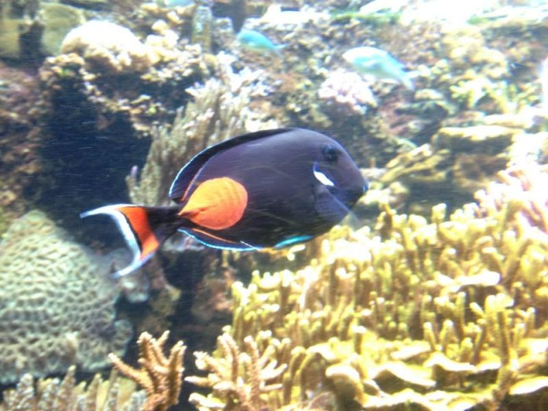 L'aquarium du Cap d'Agde (34) 18978410