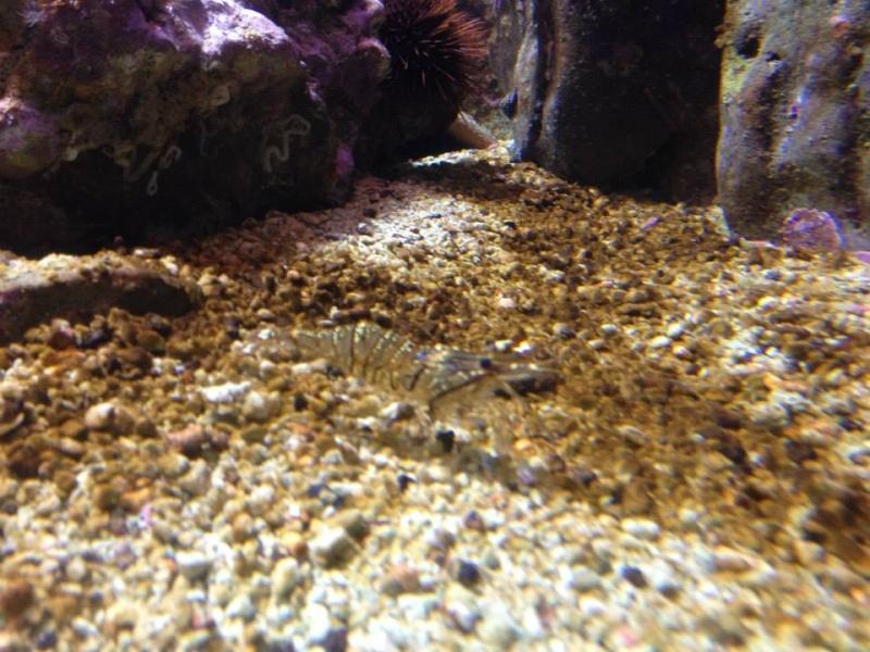 L'aquarium du Cap d'Agde (34) 18978411