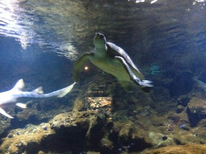 L'aquarium du Cap d'Agde (34) 19018710