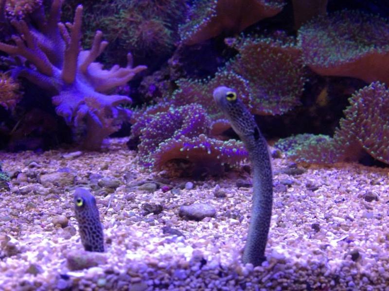 L'aquarium du Cap d'Agde (34) 19027410