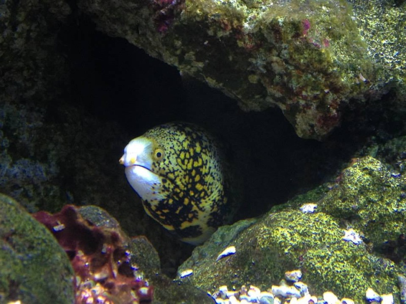 L'aquarium du Cap d'Agde (34) 19082410