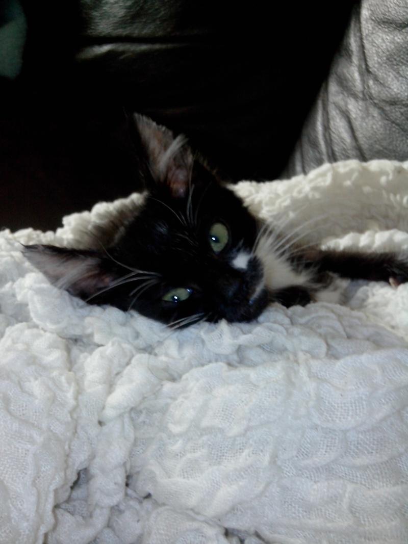 (adoptés) deux chatons à réserver (13)  Img_2011