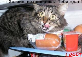 Смешные картинки и фото животных 43431810