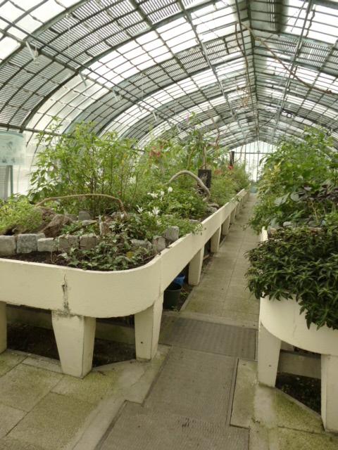 Nouveaux  aménagements ds la serre d' Acanthaceae et Commelinaceae  P1080311