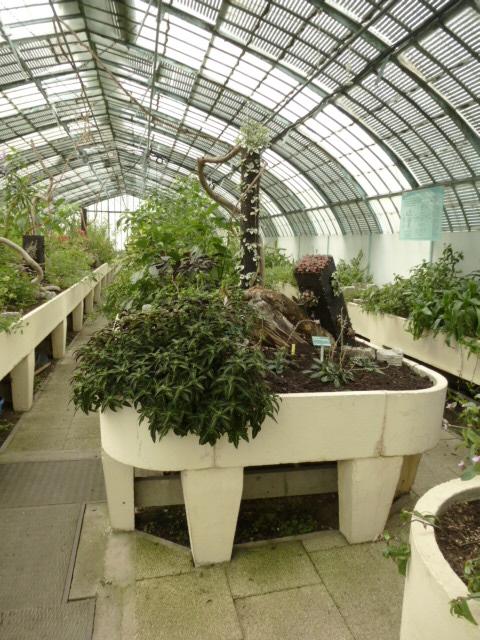 Nouveaux  aménagements ds la serre d' Acanthaceae et Commelinaceae  P1080312