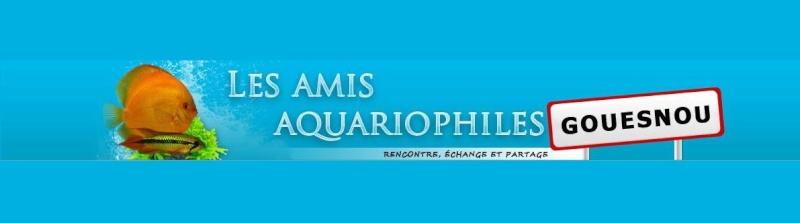 RoadTrip Aquariophile 10636310