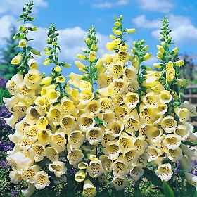 Petit quizz des plantes - Page 3 240410