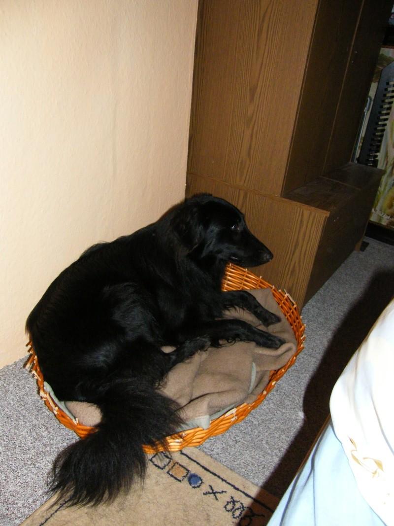 Wer Tiere liebt ist hier richtig!!! - Portal 2008_010