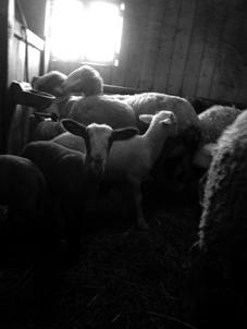 de la terre au bronze (débutant) Mouton10