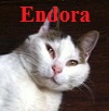 The Pattoune's Gang Endora10