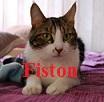 The Pattoune's Gang Fiston10
