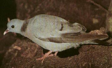 1 dia de palomas - Página 2 Paloma12