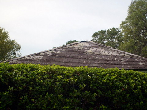 Tampa Roof Cleaning _ Roofs Cleaned 6 - 8 - 08 Tile-r10
