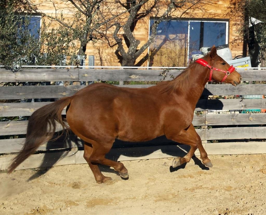 prêt jument paint horse alezane très gentille 104a10