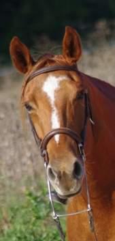 prêt jument paint horse alezane très gentille Imgp3110