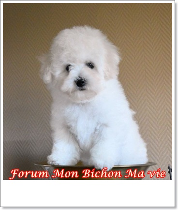 Album photos des bichons Jaia_210