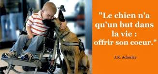 citations sur le chien 318
