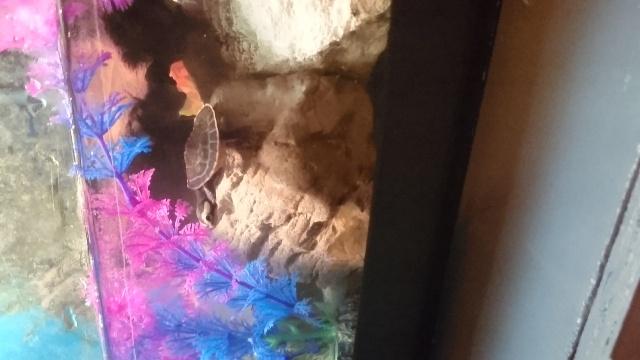 L'aquarium de ma future tortue ... - Page 2 Dsc_0718