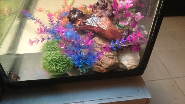 L'aquarium de ma future tortue ... - Page 2 Dsc_0720
