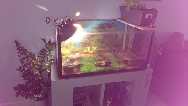 L'aquarium de ma future tortue ... - Page 3 Dsc_0730
