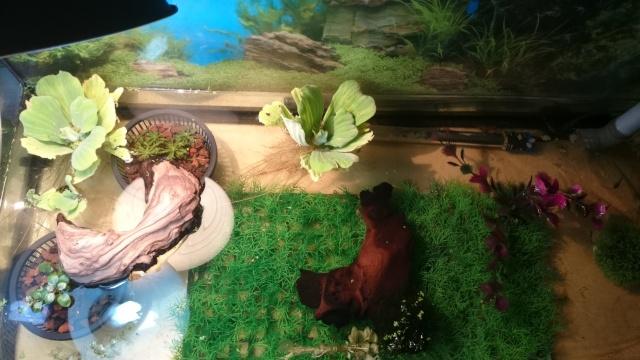 L'aquarium de ma future tortue ... - Page 3 Dsc_0731