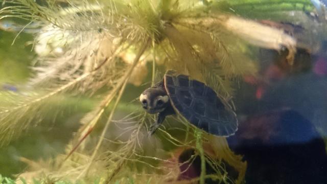 L'aquarium de ma future tortue ... - Page 3 Dsc_0815
