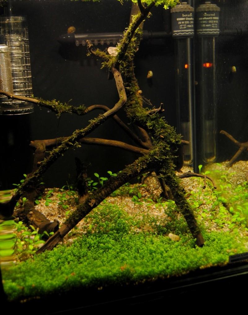 Nano 30L - Projet aquascape Dsc_0310