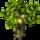 [Ecosystème] Les temps de pousse Tetard10