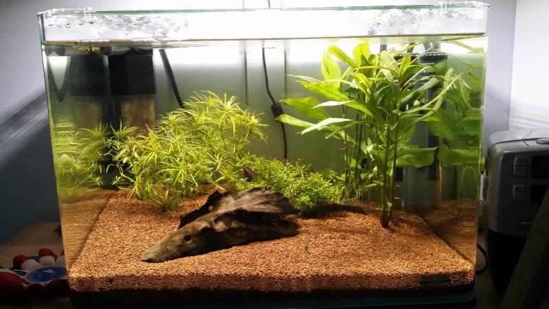 Premier aquarium betta - Page 2 20141210