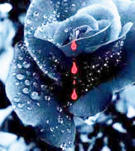 Dieu essuiera toute larme de leurs yeux _rose_12