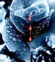Dieu essuiera toute larme de leurs yeux _rose_18