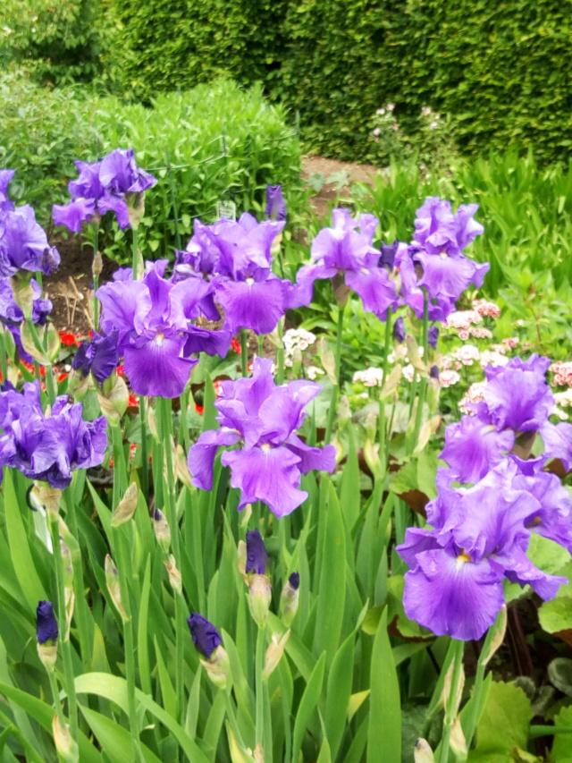 Parc Floral d'Apremont sur Allier 23510