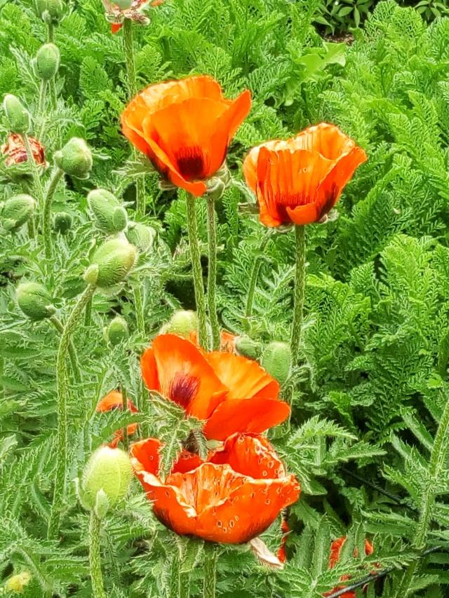 Parc Floral d'Apremont sur Allier 24110