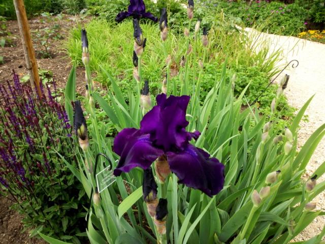 Parc Floral d'Apremont sur Allier 24410