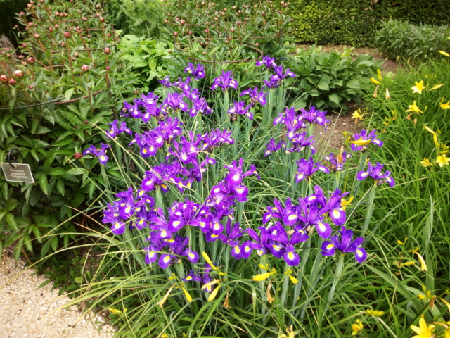 Parc Floral d'Apremont sur Allier 24510