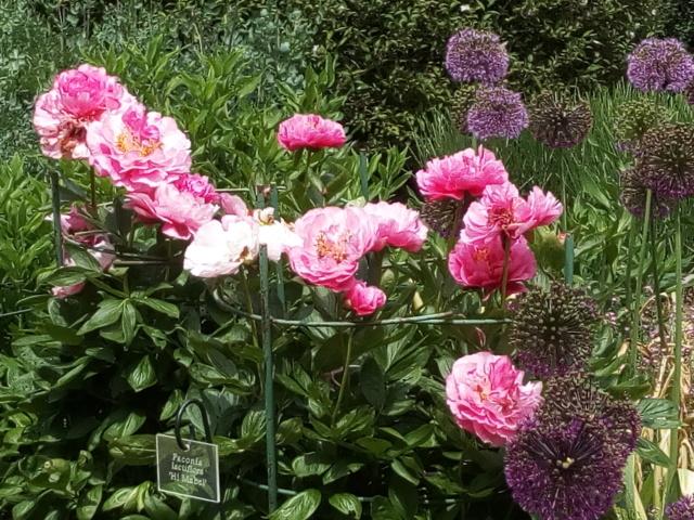 Parc Floral d'Apremont sur Allier 24810