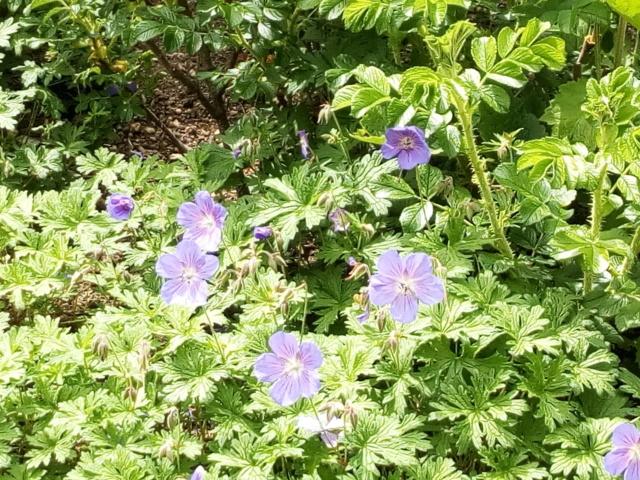 Parc Floral d'Apremont sur Allier 24910