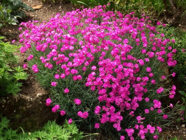 Parc Floral d'Apremont sur Allier 25010