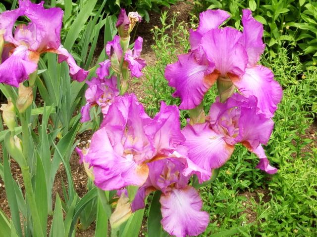Parc Floral d'Apremont sur Allier 25210