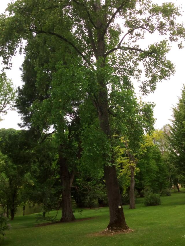 Parc Floral d'Apremont sur Allier 28110