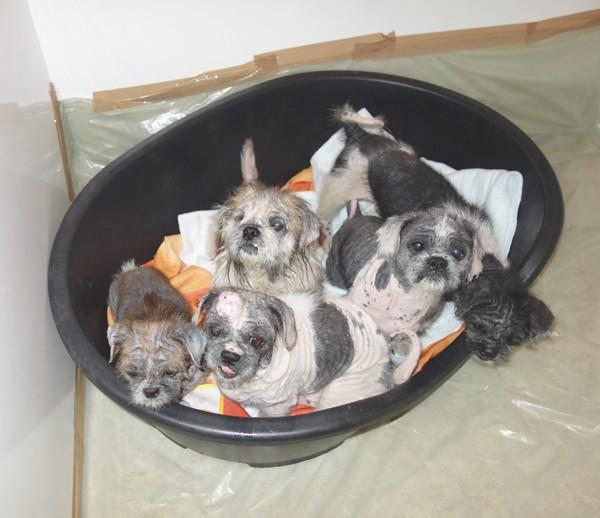 7 petits chiens retirés dans l'urgence Tous-m12