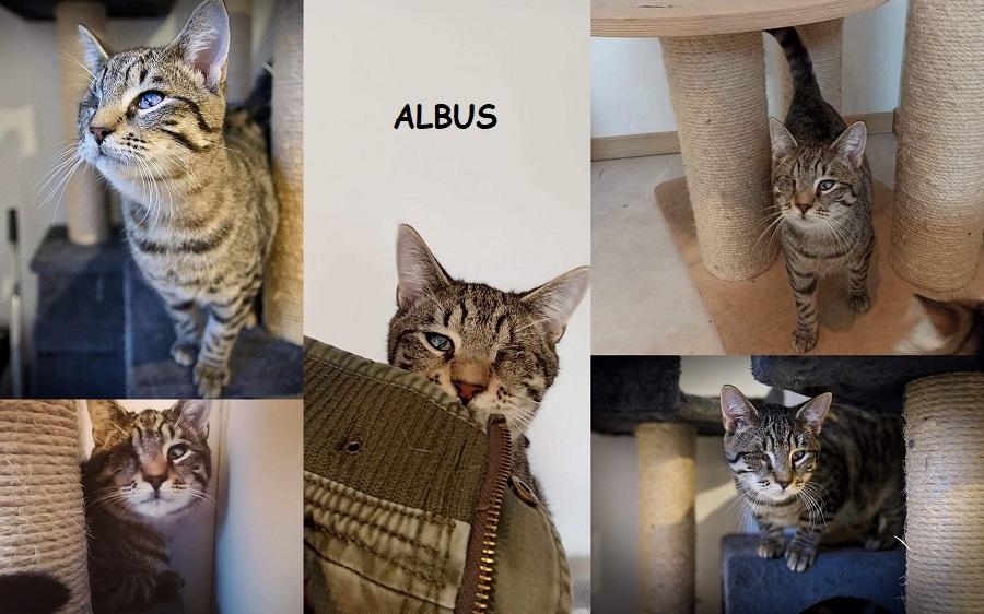 ALBUS : annonce type pour sites gratuits Albus811